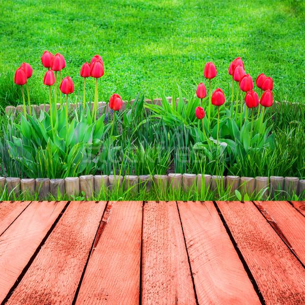 весны тюльпаны панель природы саду Сток-фото © fotoaloja