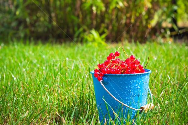 красный смородина фрукты ковша трава плодов Сток-фото © fotoaloja