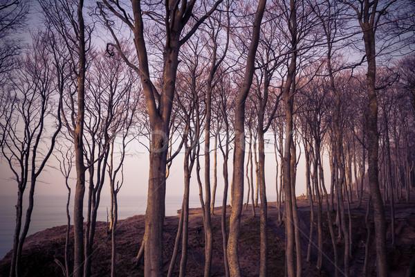 Kilátás erdő Balti-tenger tavasz tenger háttér Stock fotó © fotoaloja