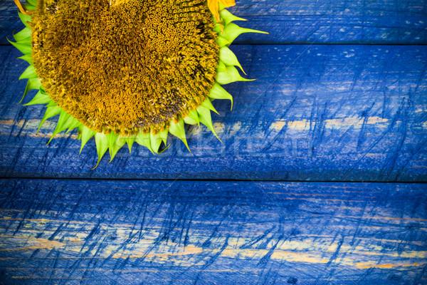 Sarı ayçiçeği boyalı çit ayçiçeği doğa Stok fotoğraf © fotoaloja