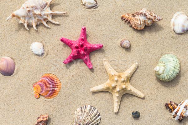Mare spiaggia varietà conchiglie sole sfondo Foto d'archivio © fotoaloja