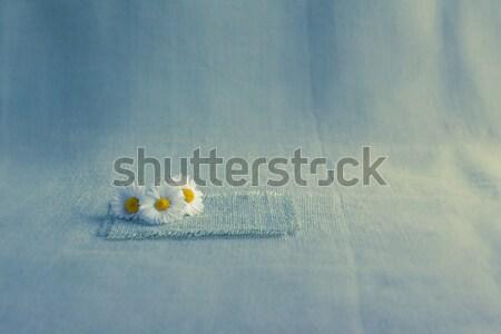 flowers daisies background canvas Stock photo © fotoaloja