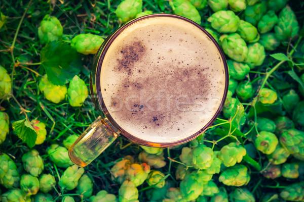 Top мнение пинта пива хмель свет Сток-фото © fotoaloja