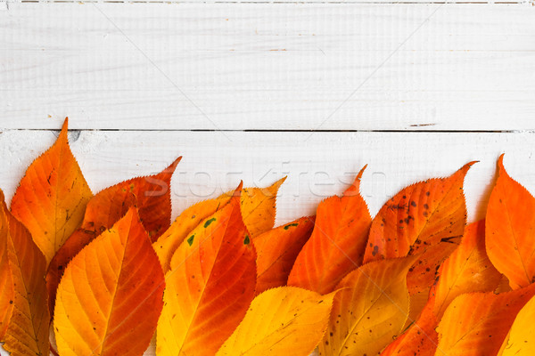 Composition autumn fiery orange leaves white boards Stock photo © fotoaloja