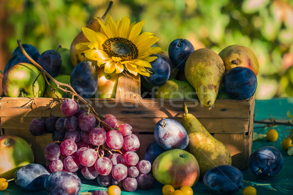 Garden late summer seasonal fruits basket light setting sun Stock photo © fotoaloja
