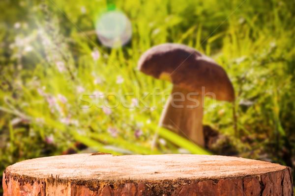 Background forest mushroom tree stumps Stock photo © fotoaloja