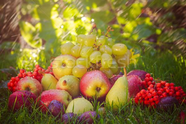 Szomorú ősz gyümölcsök fű napsütés étel Stock fotó © fotoaloja