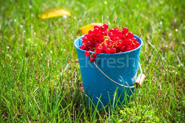 Kırmızı frenk üzümü meyve kova çim meyve Stok fotoğraf © fotoaloja