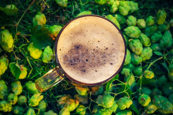 Top view pint beer background hop cones Stock photo © fotoaloja