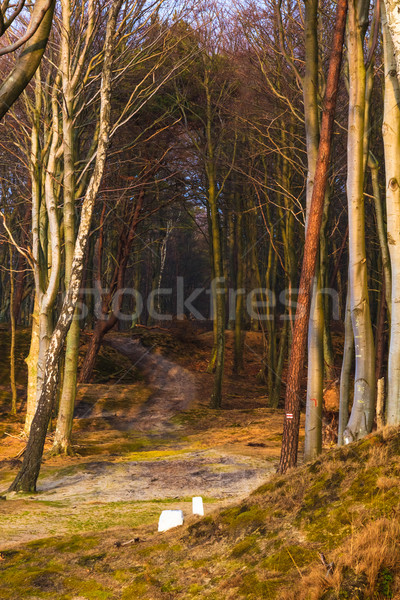 Road wooded coast sea Stock photo © fotoaloja