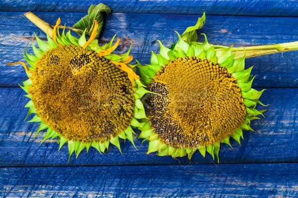два желтый подсолнухи окрашенный забор природы Сток-фото © fotoaloja