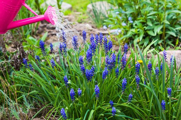 Bahar bahçe bitkiler sulama çim Stok fotoğraf © fotoaloja