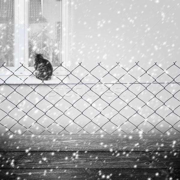 Background winter fence wooden panel wire grey cat Stock photo © fotoaloja