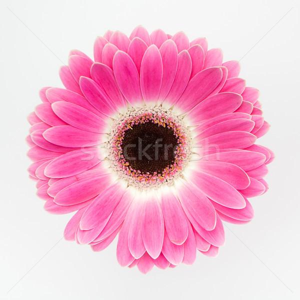 かわいい 赤 花 白 美 自然 ストックフォト © fotoduki