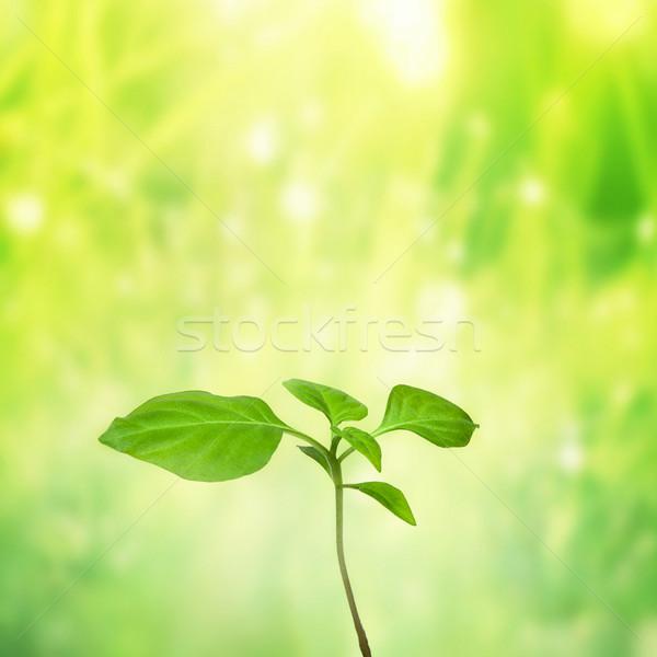 Nieuwe mooie leven hemel natuur Stockfoto © fotoduki