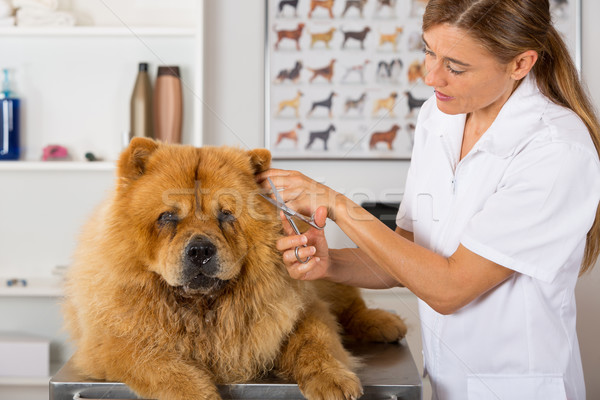 Kutyaféle fodrász szépség klinika nő kéz Stock fotó © fotoedu