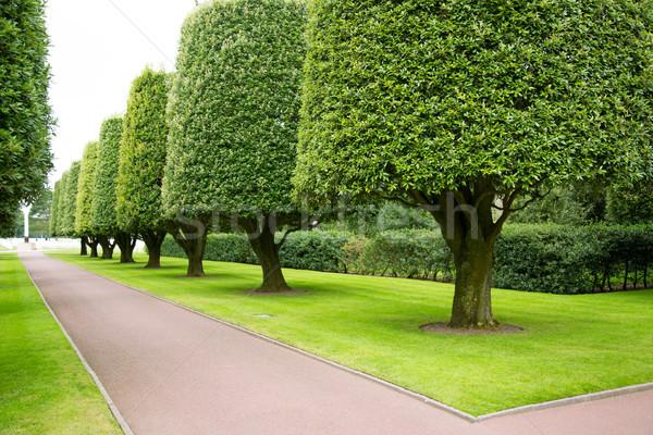 Gardens in the American cemetery Stock photo © fotoedu