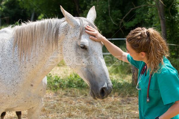 ветеринарный фермы сканирование молодые Сток-фото © fotoedu