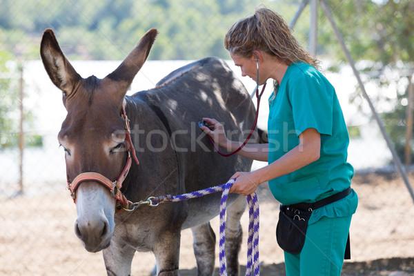 ветеринарный фермы медицинской улыбка Сток-фото © fotoedu