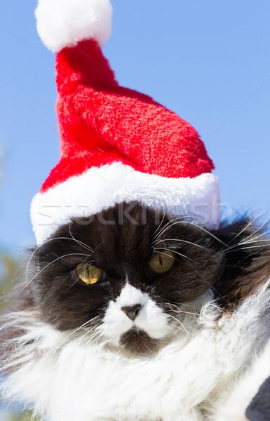 Hermosa gato Navidad CAP azul día Foto stock © fotoedu