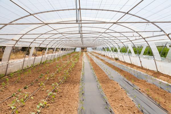 Covered greenhouse Stock photo © fotoedu