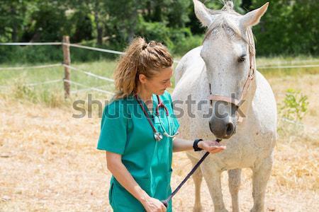 Veterinaria farm scansione giovani Foto d'archivio © fotoedu