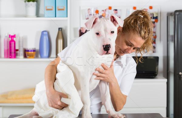 Canino peluquero belleza clínica mujer mano Foto stock © fotoedu