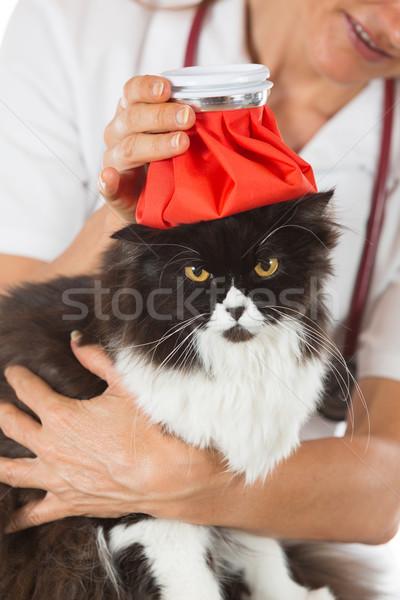кошки грипп персидская кошка горячая вода бутылку голову Сток-фото © fotoedu