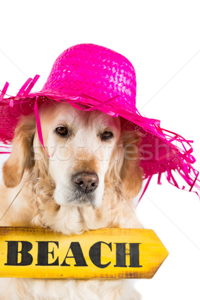 Golden Retriever with a sign indicating the beach Stock photo © fotoedu