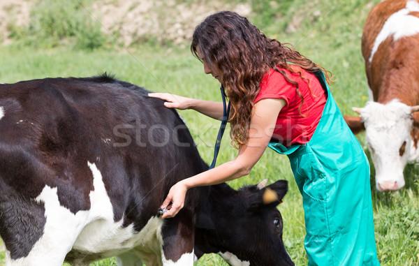Veterinário fazenda vaca sorrir Foto stock © fotoedu