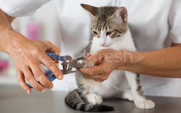 Macska fodrász állatorvosi klinika vág körmök Stock fotó © fotoedu