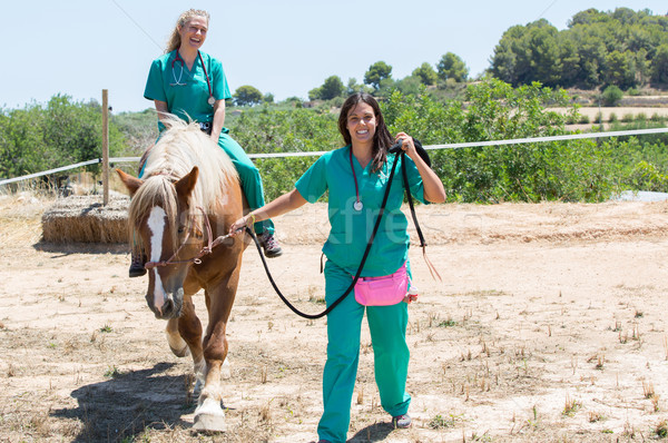 Veterinário cavalos fazenda dois jovem cavalo Foto stock © fotoedu