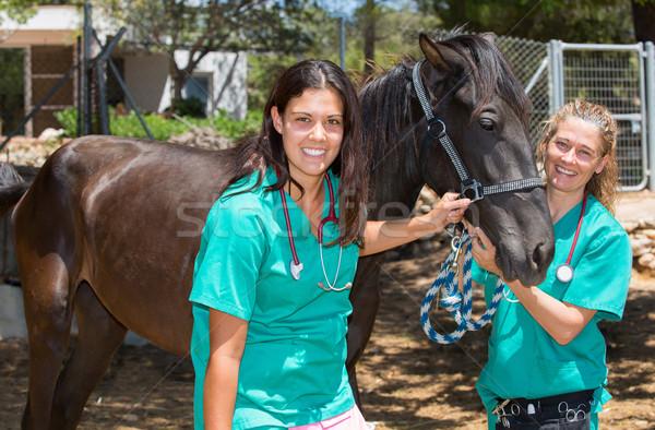 Stock photo: Veterinary horses on the farm