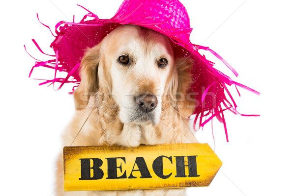 Stock photo: Golden Retriever with a sign indicating the beach