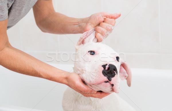Banyo köpek saç banyo temizlik Stok fotoğraf © fotoedu