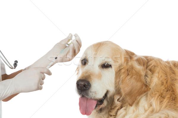 Veterinary clinic Stock photo © fotoedu