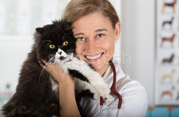 Veterinary clinic with a kitten Stock photo © fotoedu