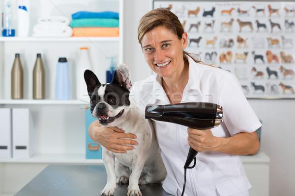 Canino cabeleireiro beleza clínica francês buldogue Foto stock © fotoedu