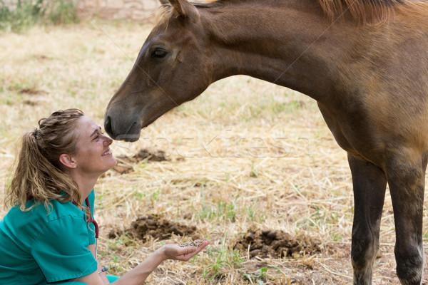Veterinaria farm pensare cavallo sorriso Foto d'archivio © fotoedu