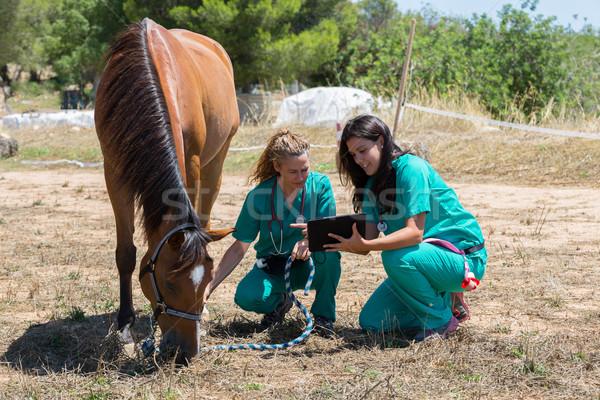 Veterinaria cavalli farm sorriso medici Foto d'archivio © fotoedu