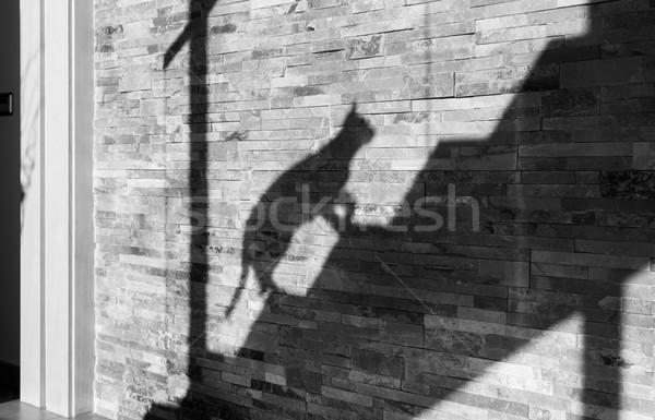 Sombra gato hasta escaleras casa sol Foto stock © fotoedu