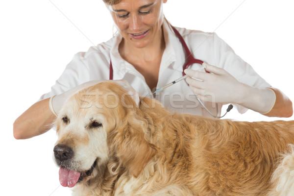 Stok fotoğraf: Veteriner · klinik · aşı · köpek · golden · retriever · doktor