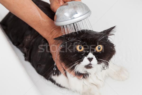 Bathing a cat Stock photo © fotoedu