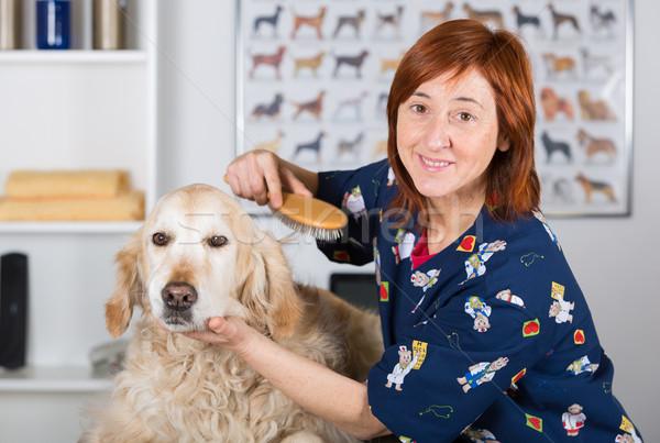 Psi fryzjer piękna kliniki golden retriever kobieta Zdjęcia stock © fotoedu