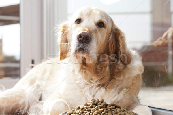 Dog with his food Stock photo © fotoedu