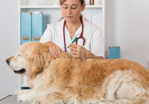 Veterinaria clinica golden retriever consultazione medico ospedale Foto d'archivio © fotoedu