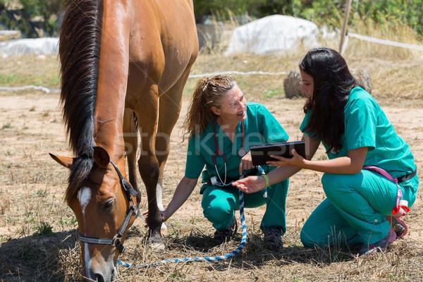 Veterinário cavalos fazenda sorrir médico Foto stock © fotoedu