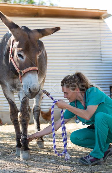 Vétérinaire ferme médicaux sourire Photo stock © fotoedu