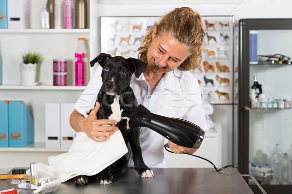 Vet with his dog American Staffordshire Stock photo © fotoedu