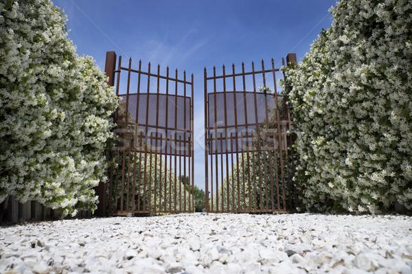 Entrada cubierto flor blanca flor fondo Foto stock © Fotografiche